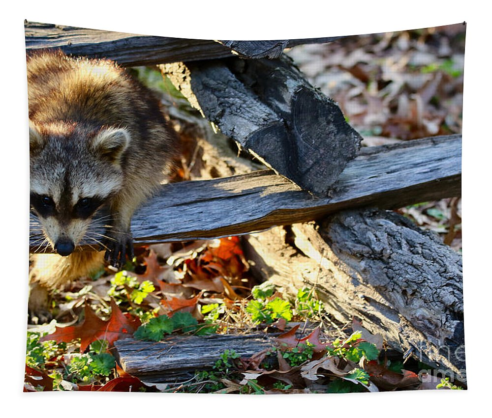 Raccoon Tapestry featuring the photograph A Foraging Raccoon by Rachel Morrison