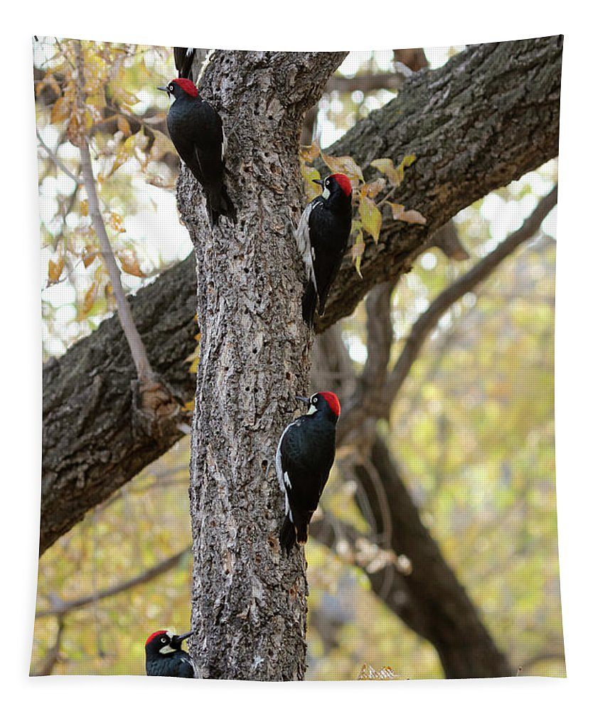 Nature Tapestry featuring the photograph A Group Of Acorn Woodpeckers In A Tree by Derrick Neill
