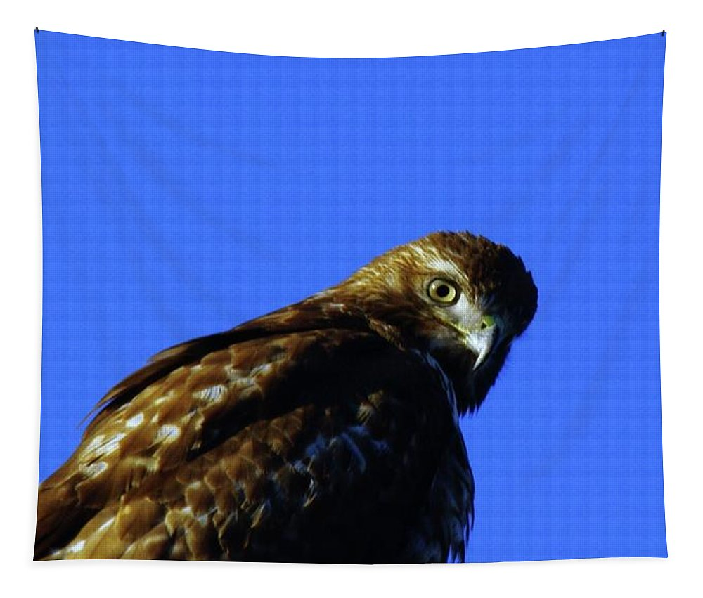 Hawks Tapestry featuring the photograph A Hawk Looking Back by Jeff Swan