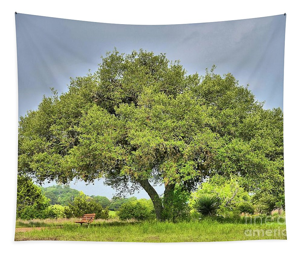Live Oak Tapestry featuring the photograph A Hill Country Moment by Gary Richards