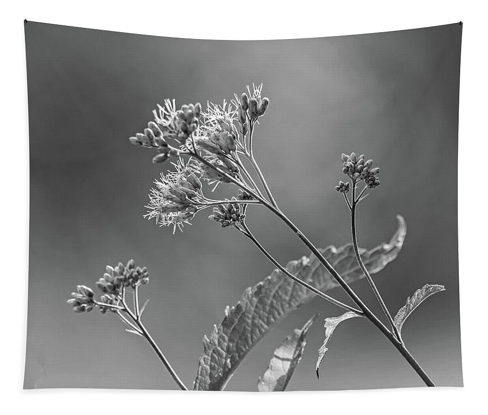 Steve Harrington Tapestry featuring the photograph A Lazy Summer Day - Joe Pye Weed 2 Bw by Steve Harrington