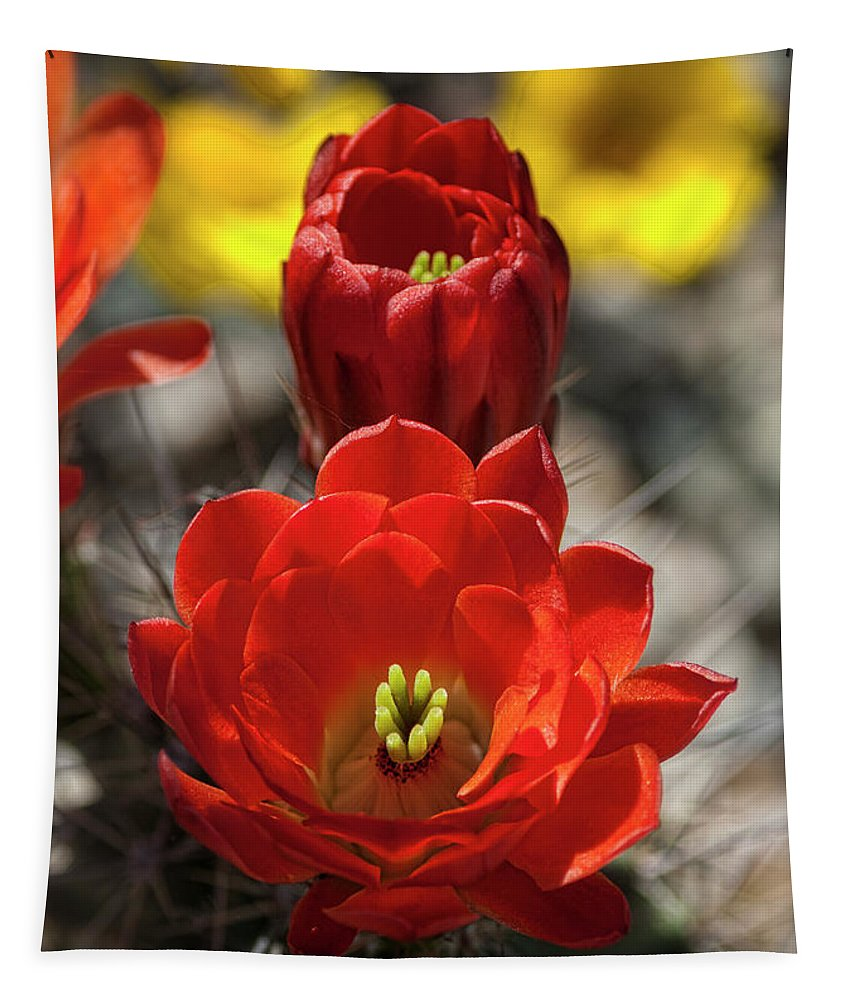 Claret Cup Cactus Tapestry featuring the photograph A Little Red Beauty by Saija Lehtonen