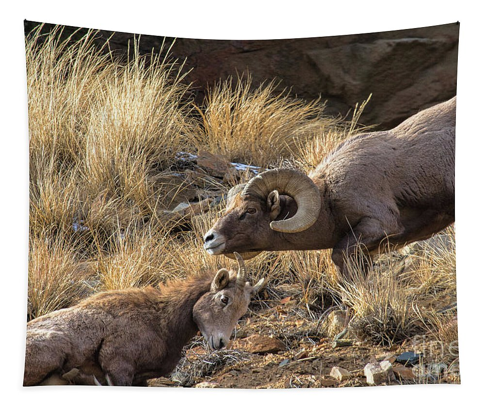 Bighorn Sheep Tapestry featuring the photograph A Measured Response by Jim Garrison