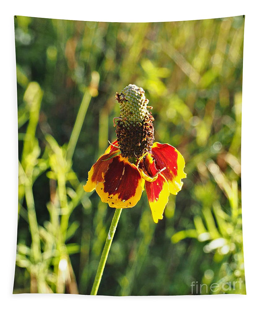 Mexican Hat Tapestry featuring the photograph A Mexican Hat Flora Portrait by Gary Richards