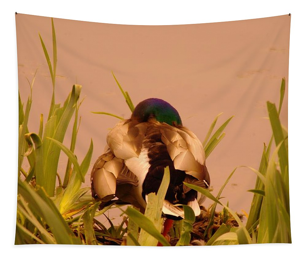 Bird Tapestry featuring the photograph A Napping Mallard by Jeff Swan