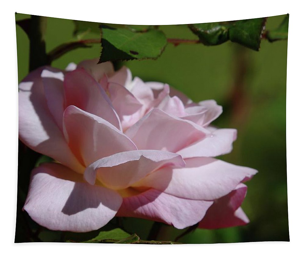 Roses Tapestry featuring the photograph A Pink Rose by Jeff Swan