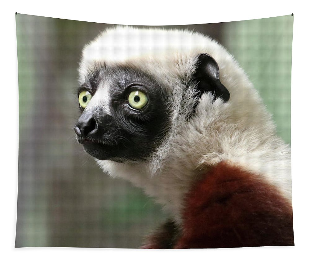 Nature Tapestry featuring the photograph A Portrait Of A Sifaka Primate, A Large Lemur by Derrick Neill
