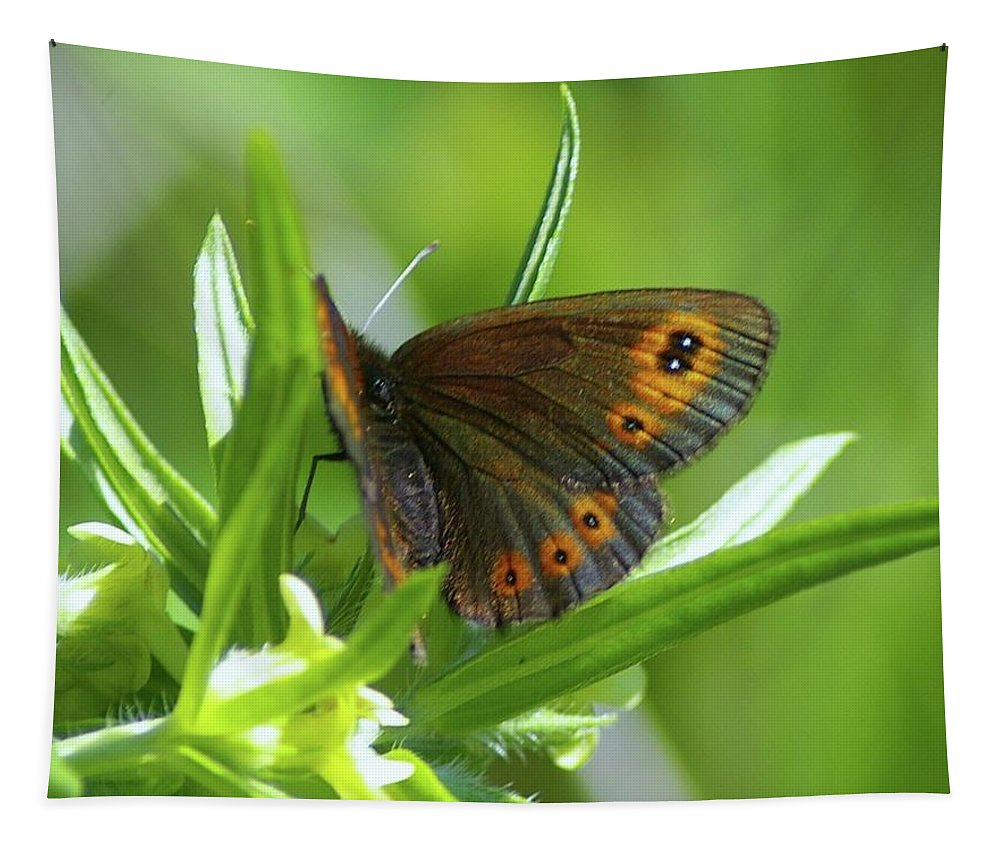 Butterflies Tapestry featuring the photograph A Red Butterfly Perching by Jeff Swan