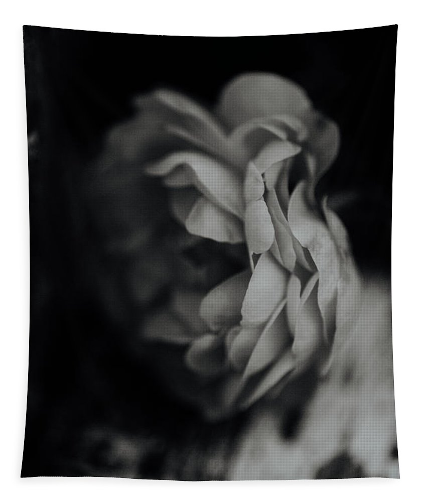 Rose Tapestry featuring the photograph A Rose In Black And White by Rachel Morrison