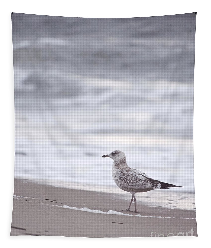 Seagull Tapestry featuring the photograph A Seagull At The Beach by Rachel Morrison