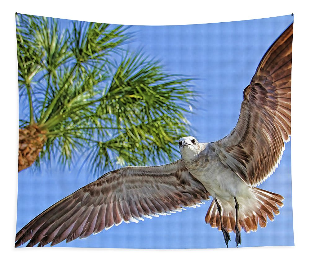 Laughing Gull Tapestry featuring the photograph A Seagull Flyby by HH Photography of Florida