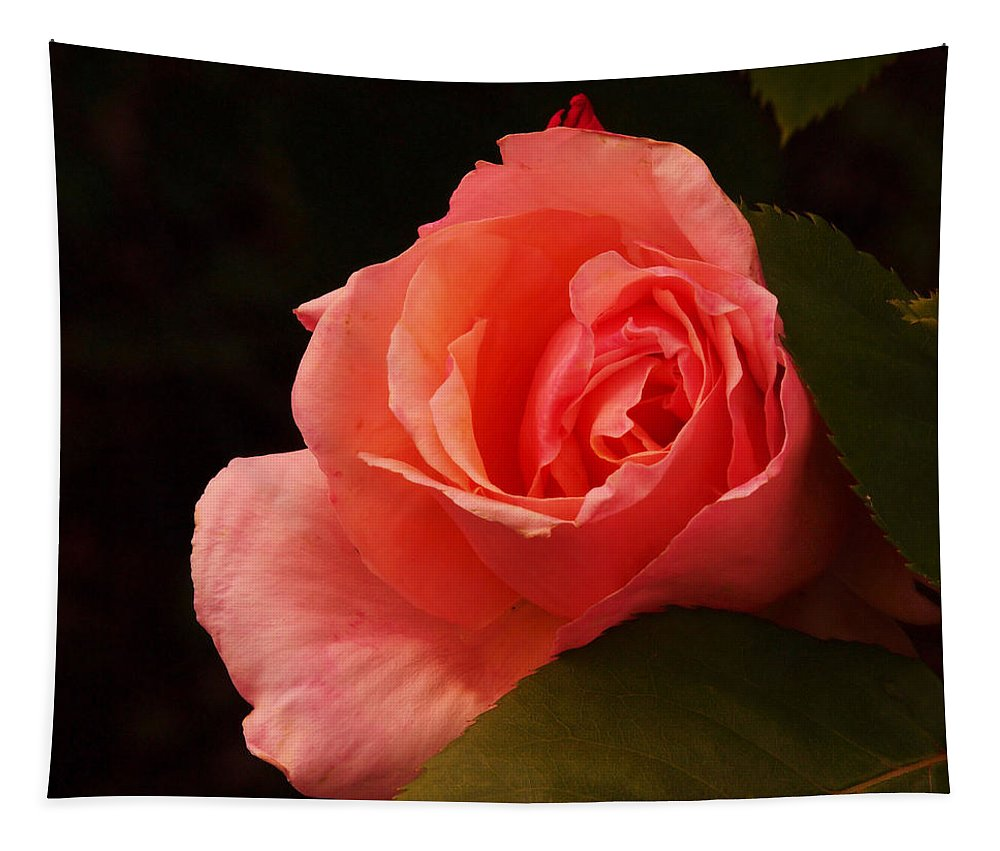 Flowers Tapestry featuring the photograph A Soft Rose by Jeff Swan