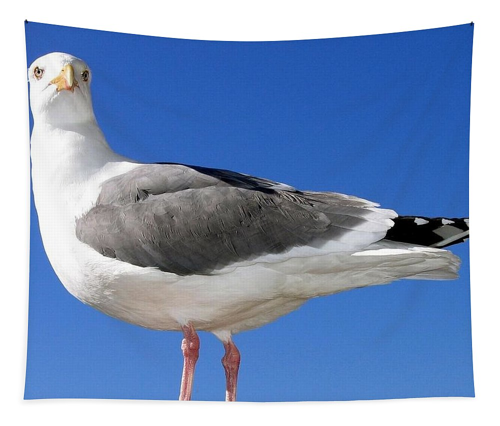 Seagull Tapestry featuring the photograph A Splendid Seagull by Will Borden