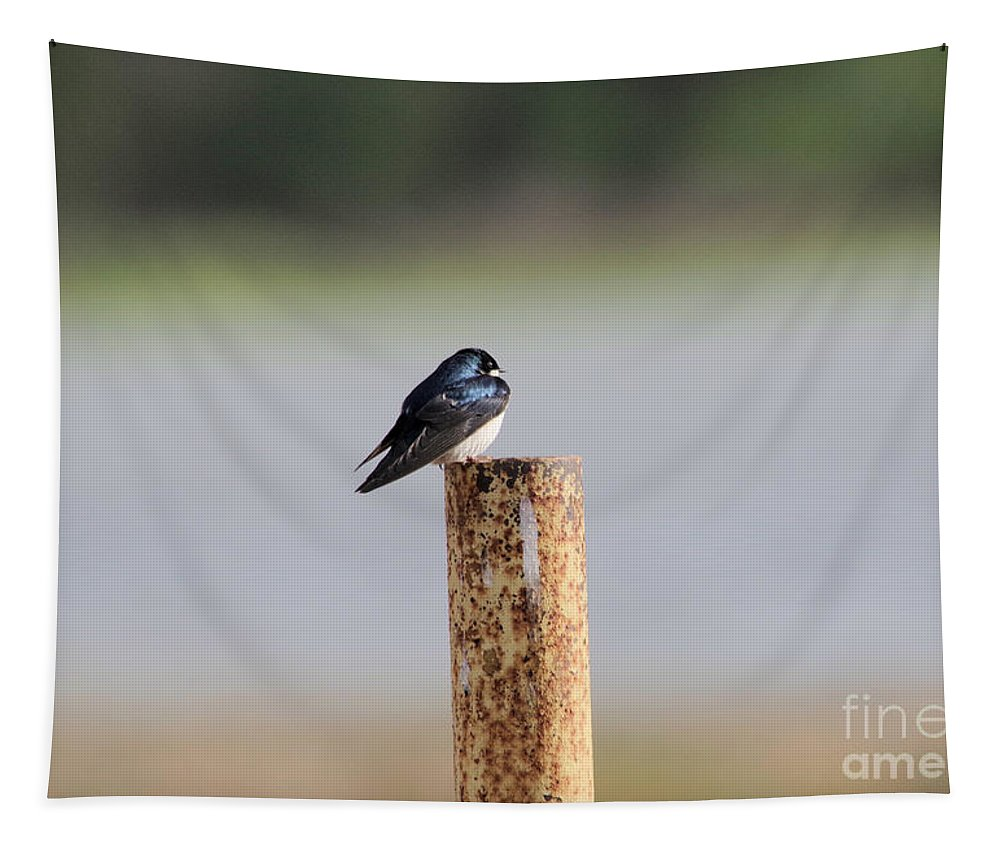 Swallow Tapestry featuring the photograph A Swallow On A Pole by Jeff Swan