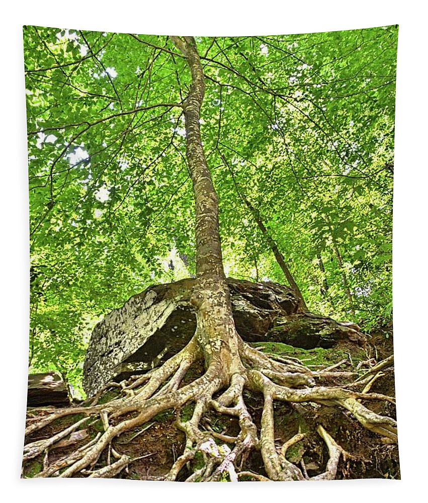 A Tree And It's Roots Tapestry featuring the photograph A Tree And It's Roots by Lisa Wooten