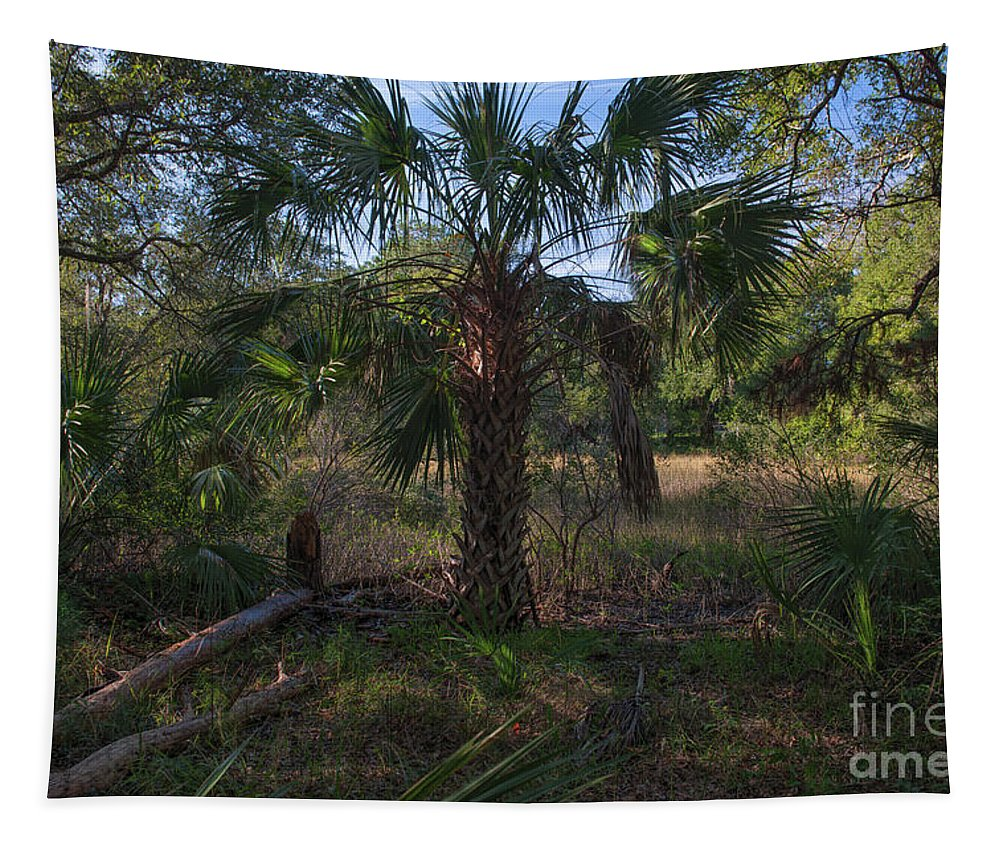 Daniel Island Tapestry featuring the photograph A Walk In The Woods by Dale Powell