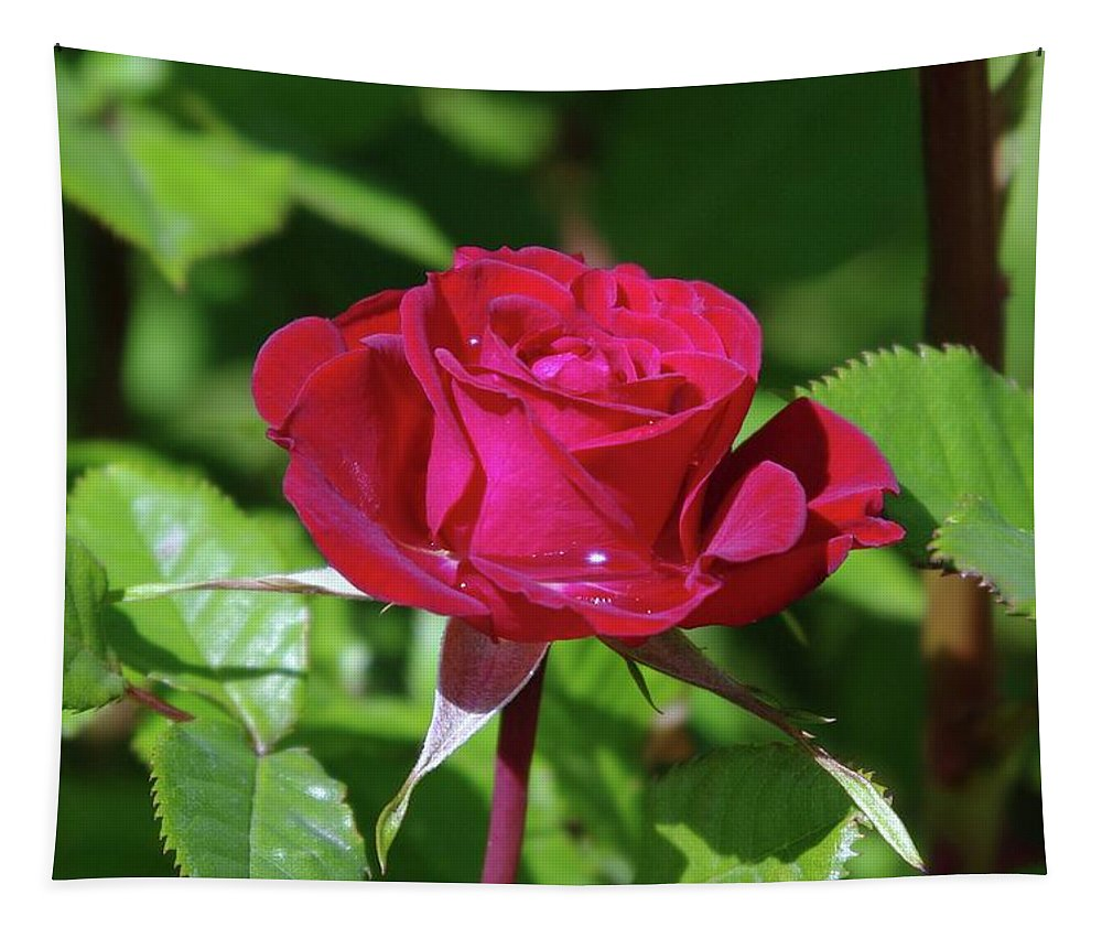 Rose Tapestry featuring the photograph A Watered Rose by Jeff Swan
