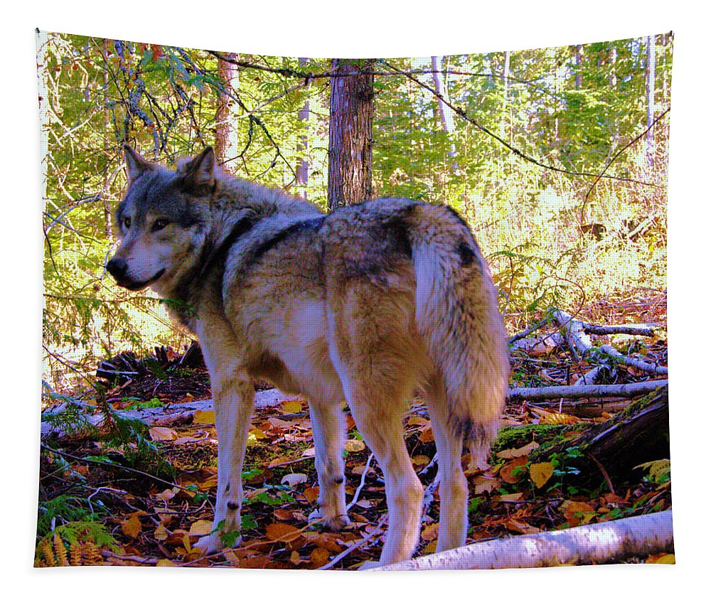 Wolf Tapestry featuring the photograph A Wolf Gazes Back by Jeff Swan
