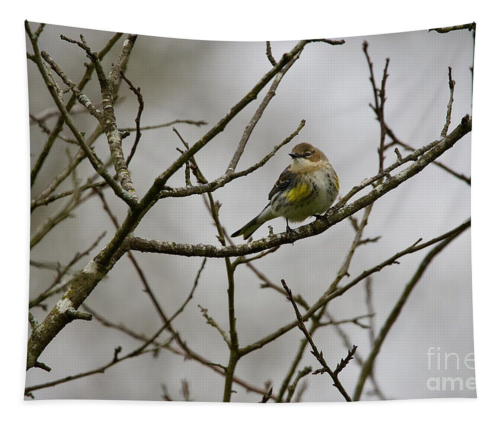 Yellow-rumped Warbler Tapestry featuring the photograph A Yellow-rumped Warbler In The Evening by Rachel Morrison