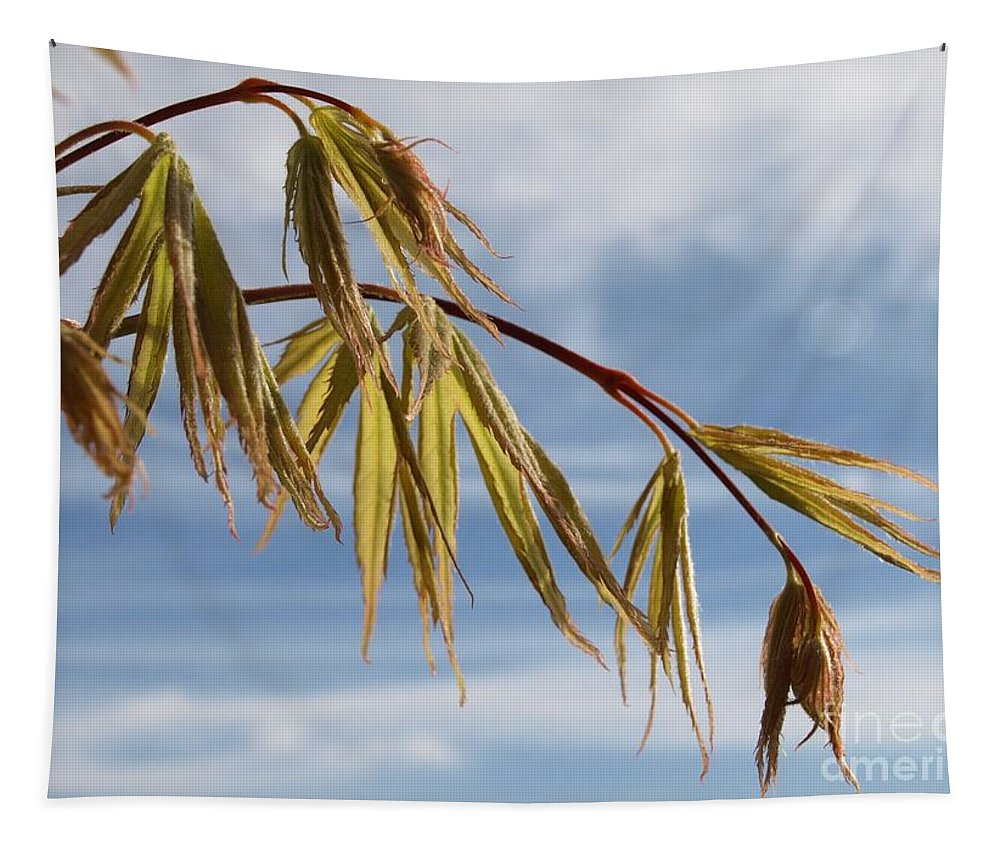 Acer Tapestry featuring the photograph Acer by Richard Brookes