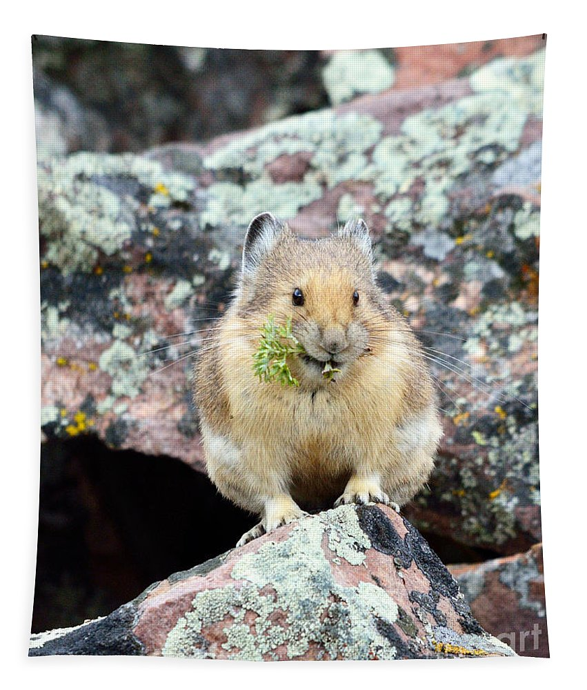 Pika Tapestry featuring the photograph Adding Garnish by Brad Christensen