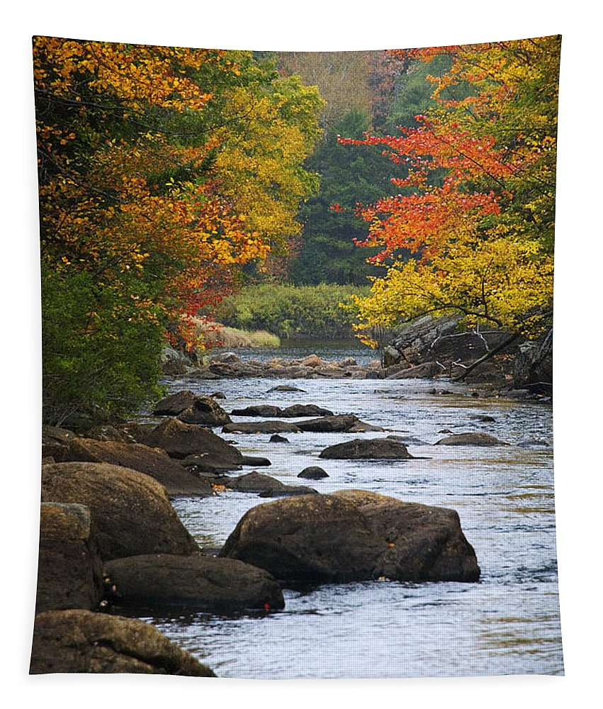 Autumn Tapestry featuring the photograph Adirondack Fall Stream 2 by Tony Beaver