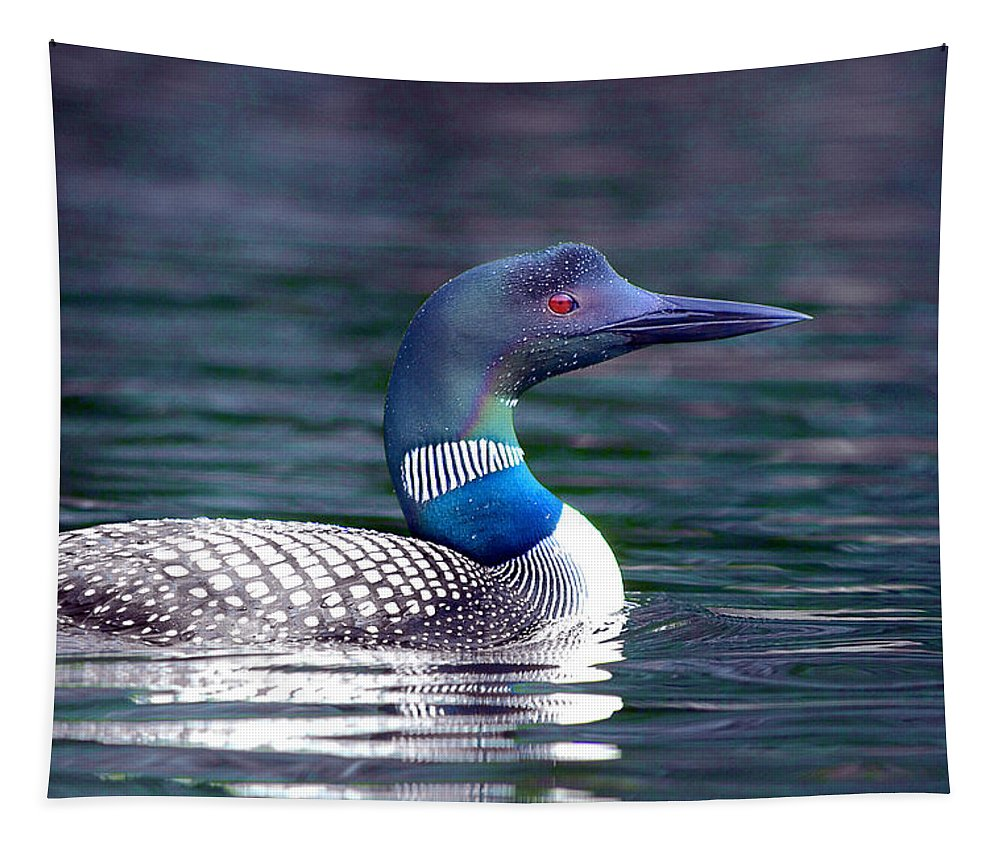 Loon Tapestry featuring the photograph Adirondack Loon 3 by Tony Beaver