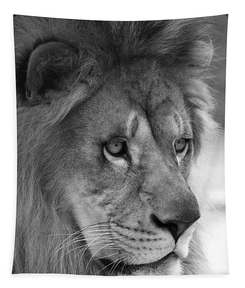 Lion Tapestry featuring the photograph African Lion #8 Black And White by Judy Whitton