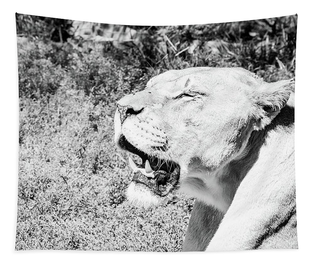 Animal Tapestry featuring the photograph African Lion by Pamela Williams