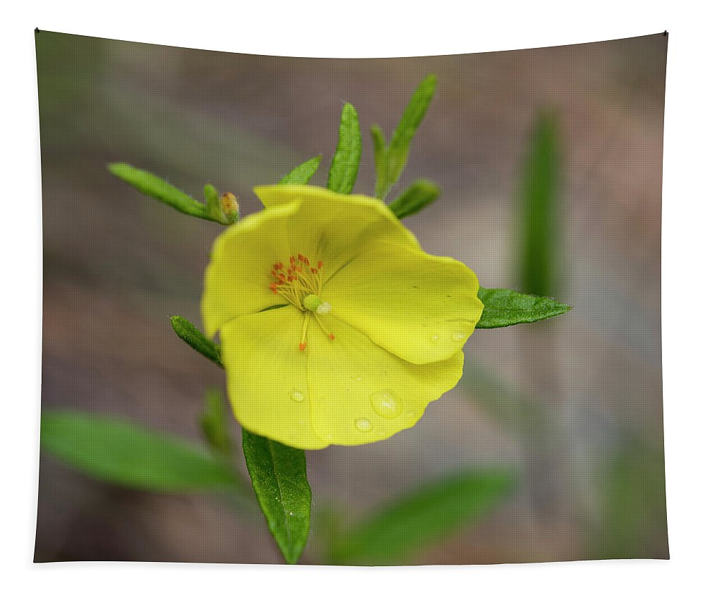 Flower Photography Tapestry featuring the photograph After The Rain by Brian Stricker