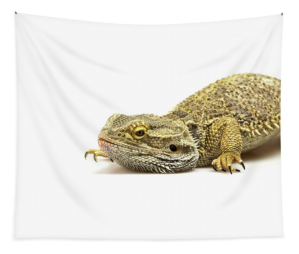Lizard Tapestry featuring the photograph Agama Lizard by Jaroslav Frank