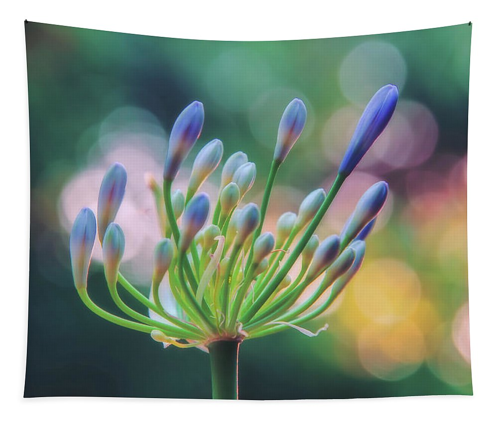Photography Tapestry featuring the digital art Agapanthus Dawn by Terry Davis