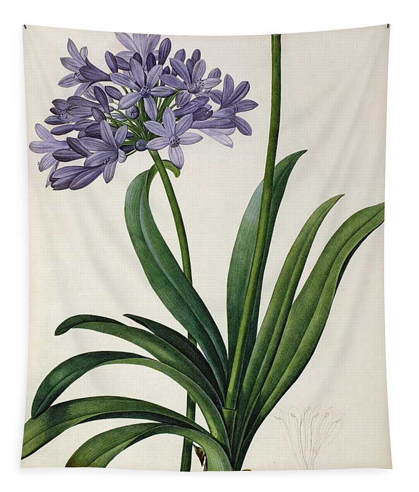 Vintage Tapestry featuring the painting Agapanthus umbrellatus by Pierre Redoute