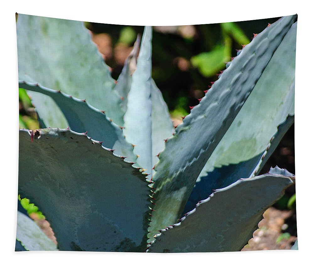 Cactus Tapestry featuring the photograph Agave by Tikvah's Hope