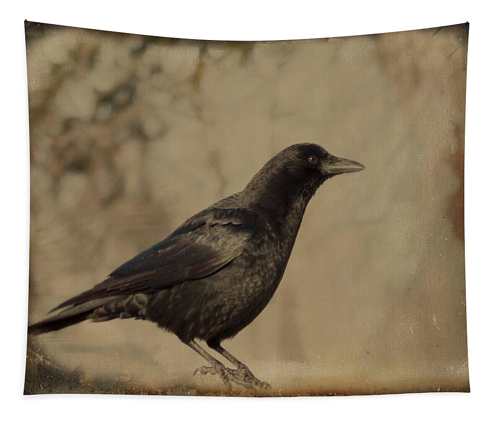 Aged Crow Art Tapestry featuring the photograph Age Old Crow by Gothicrow Images