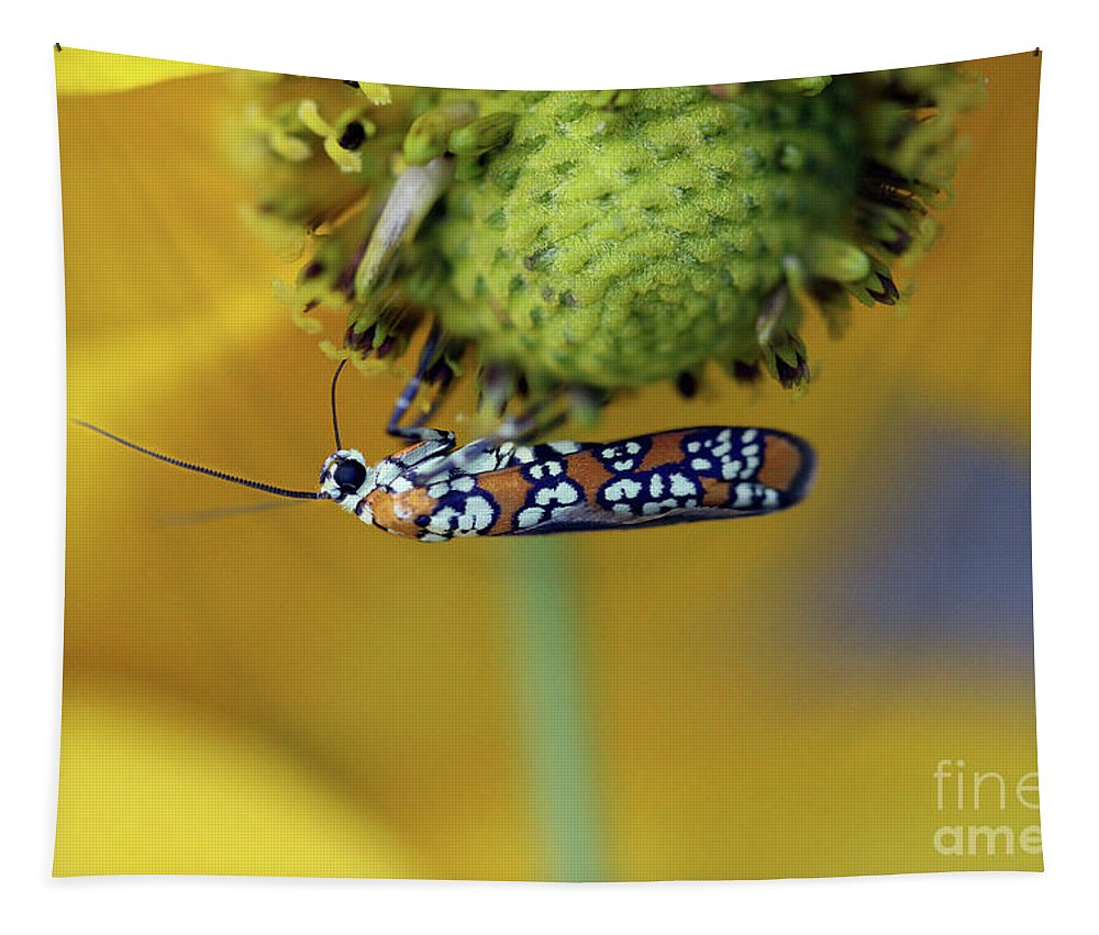 Moth Tapestry featuring the photograph Ailanthus Webworm Moth #6 by Karen Adams