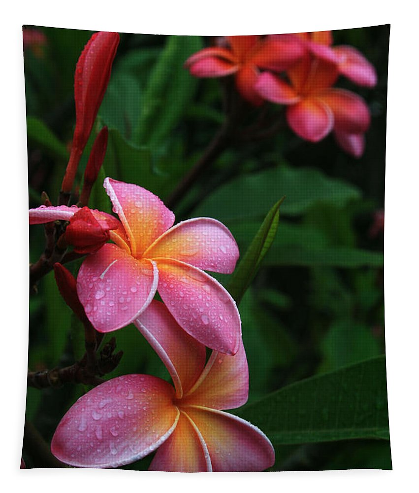 Aloha Tapestry featuring the photograph Akeakamai Pua Melia Tropical Plumeria by Sharon Mau