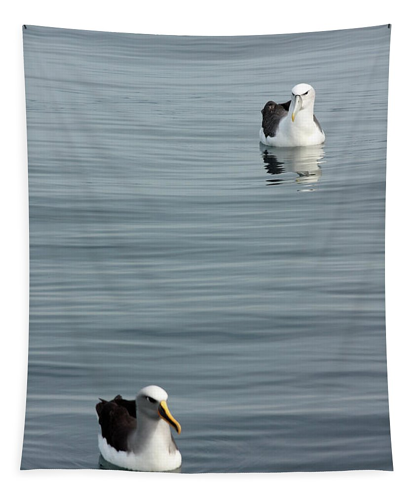 Albatross Tapestry featuring the photograph Albatross by Bruce