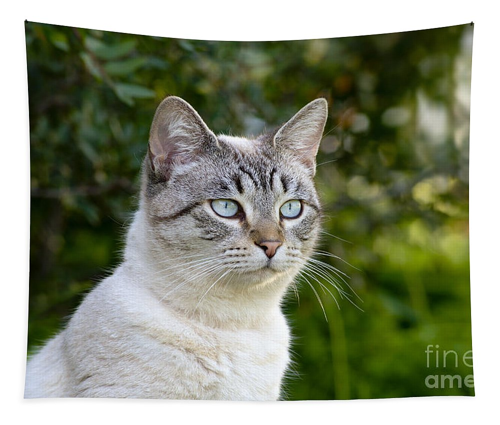 Cat Tapestry featuring the photograph Alert Tabby With Blue Eyes by Mikehoward Photography