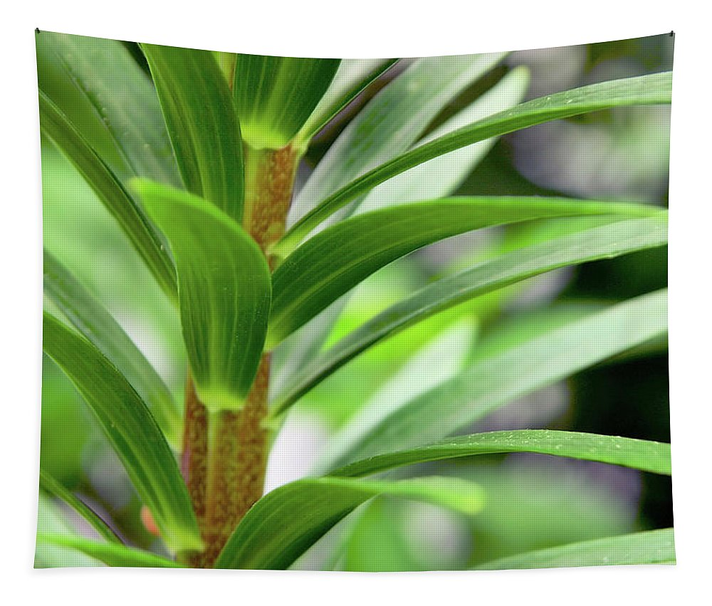 Green Tapestry featuring the photograph All Green by Karol Livote