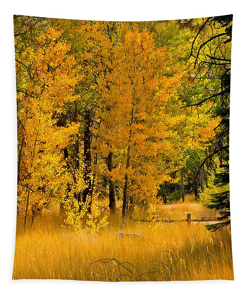 Fall Tapestry featuring the photograph All The Soft Places To Fall by Mitch Shindelbower