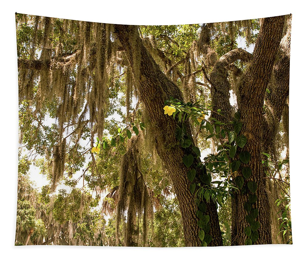 Tree Tapestry featuring the photograph Allamanda And Oak Tree by Zina Stromberg