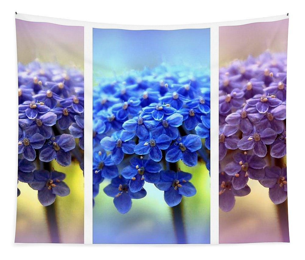 Allium Tapestry featuring the photograph Allium Triptych by Jessica Jenney
