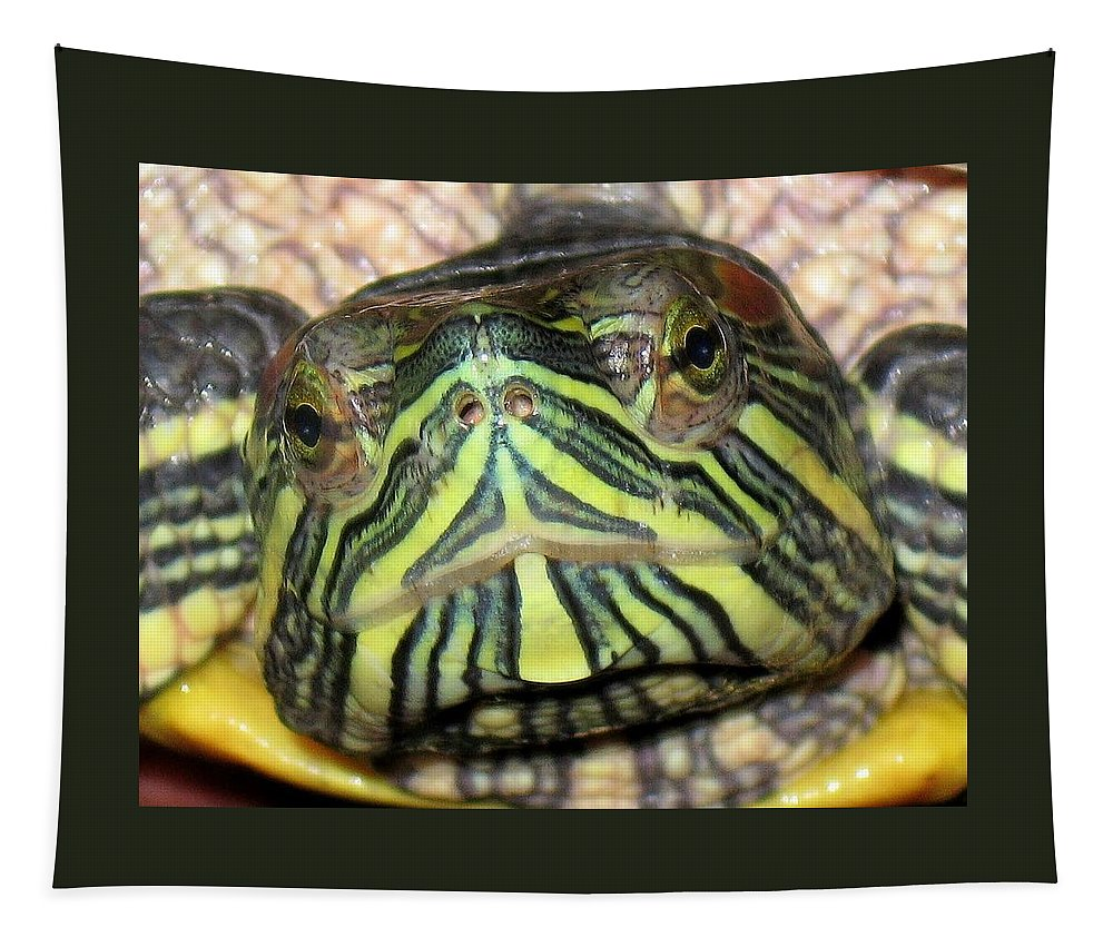 Turtle Tapestry featuring the photograph Alpha by Lori Pessin Lafargue