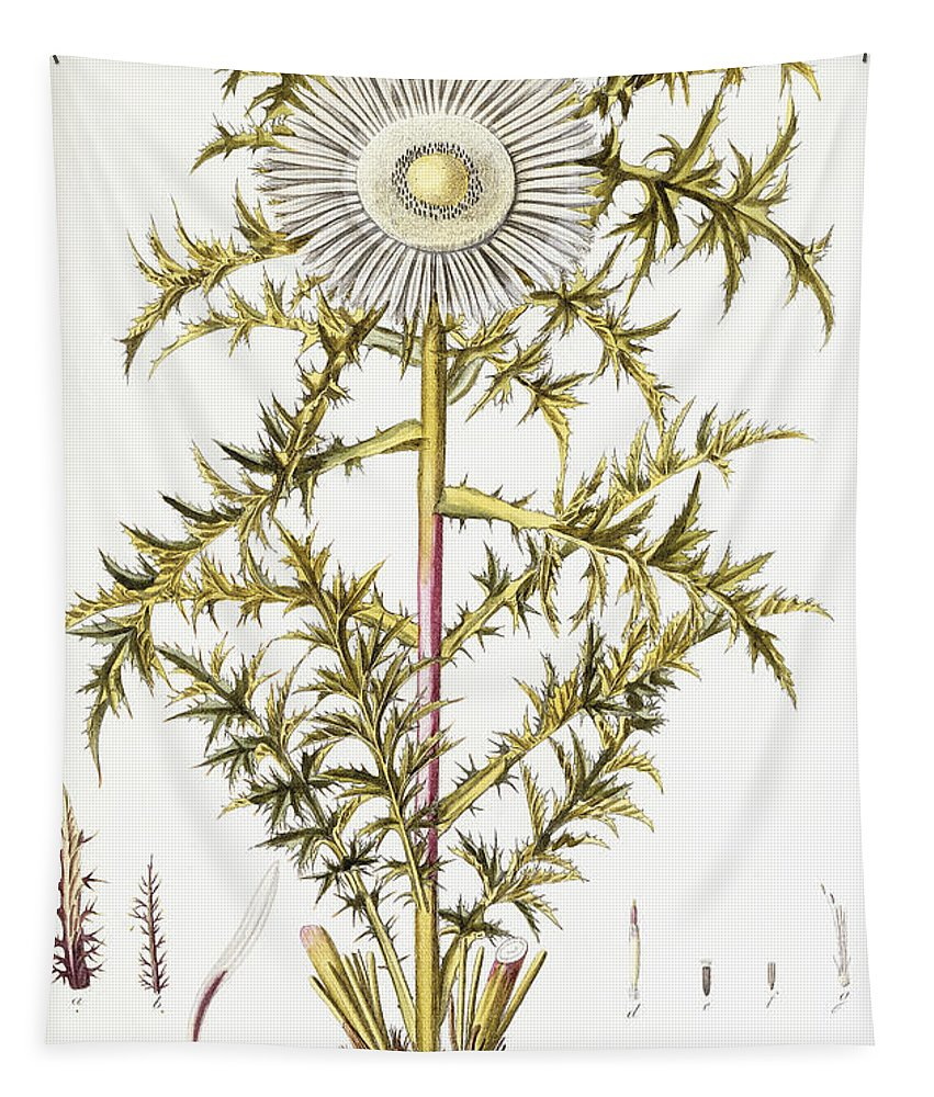 Thistle Tapestry featuring the painting Alpine Thistle by Austrian School