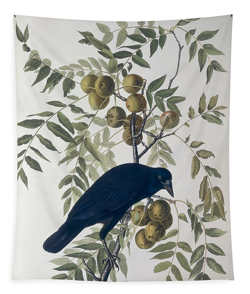 American Crow Tapestry featuring the drawing American Crow by John James Audubon