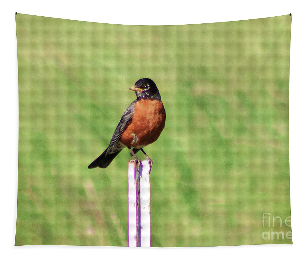 Robin Tapestry featuring the photograph American Robin by Janie Johnson