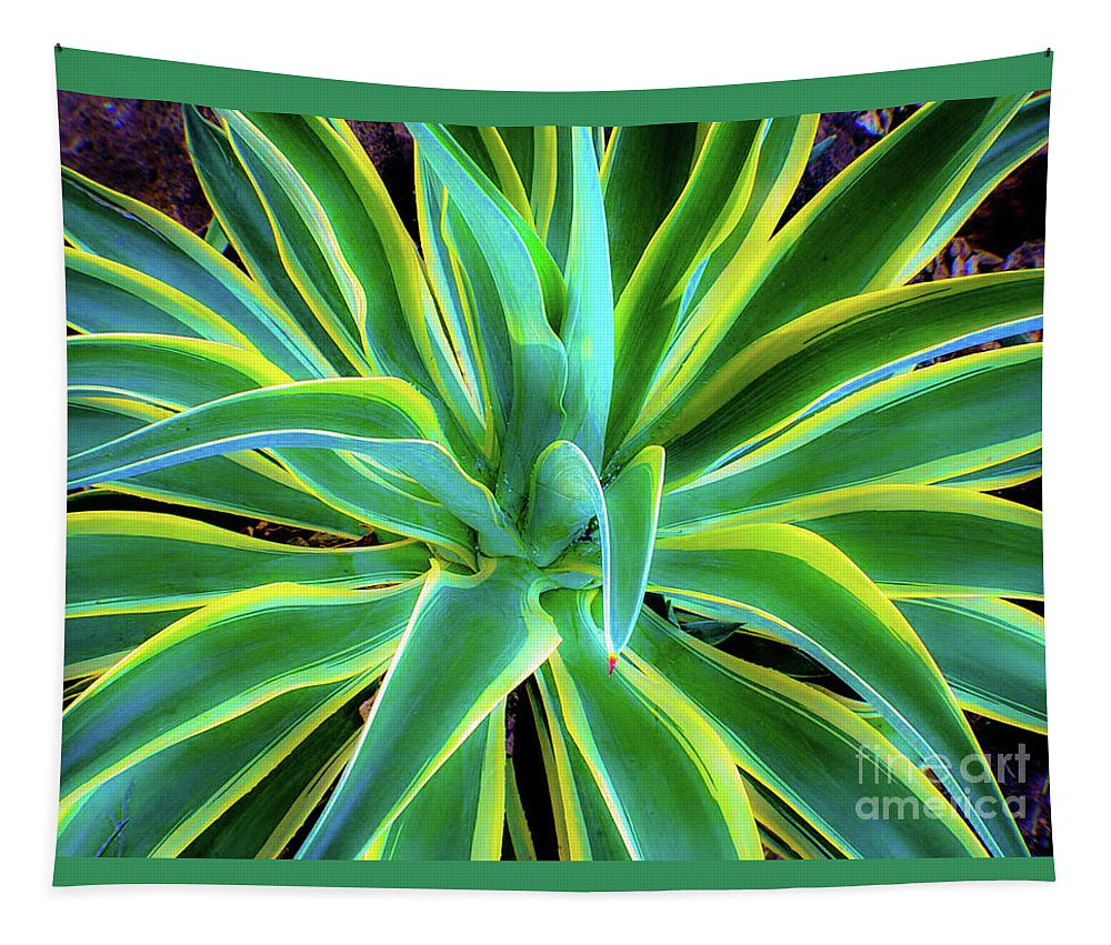 Agave Tapestry featuring the photograph An Agave In Color by D Davila