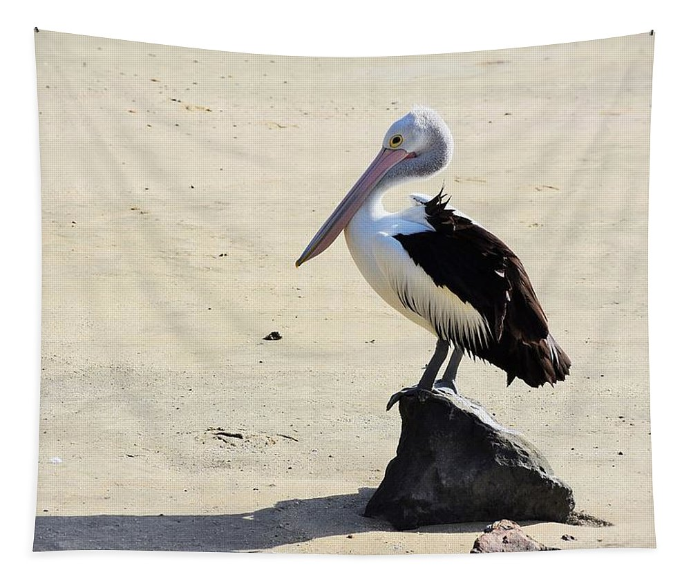 Waterbird Tapestry featuring the photograph Australian Pelican In Cairns by Rhonda Allbrandt