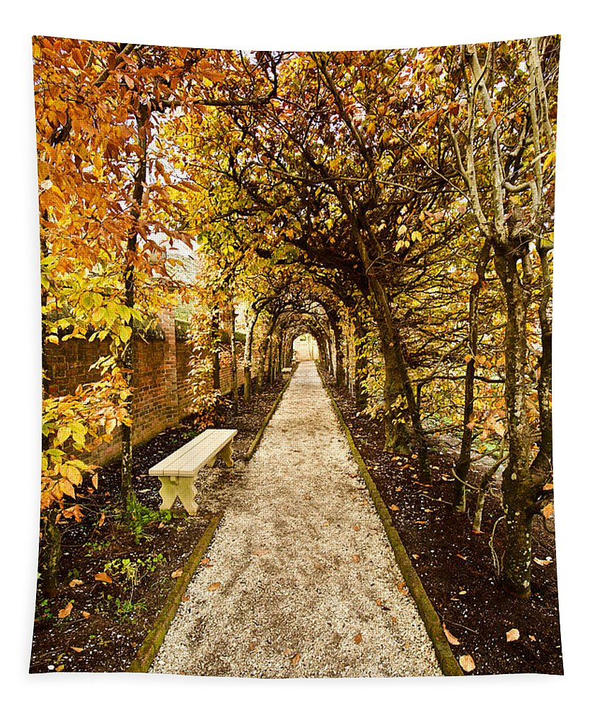 Autumn Tapestry featuring the photograph An Autumn Path by Rachel Morrison